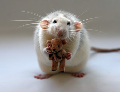 mouse_with_teddy_bear