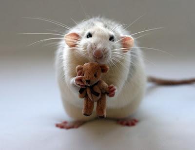 mouse_with_teddy_bear
