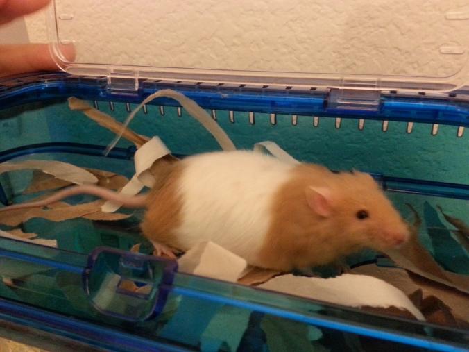 Amelia Pond Mouse