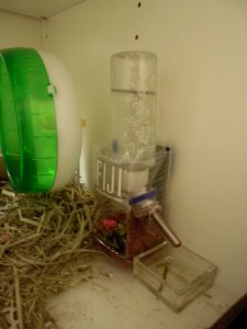 The water tower allows me to put a water supply anywhere in the habitat.